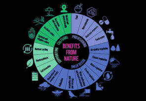 Financial Institutions Exposed to Nature-Related Risks